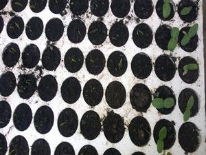 Piccole piantine crescono agriturismo cupido for Piantine orto prezzi